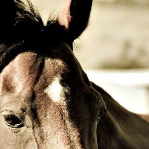 HorseBoarding