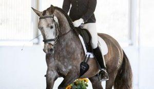 Muscles for Dressage headers pic
