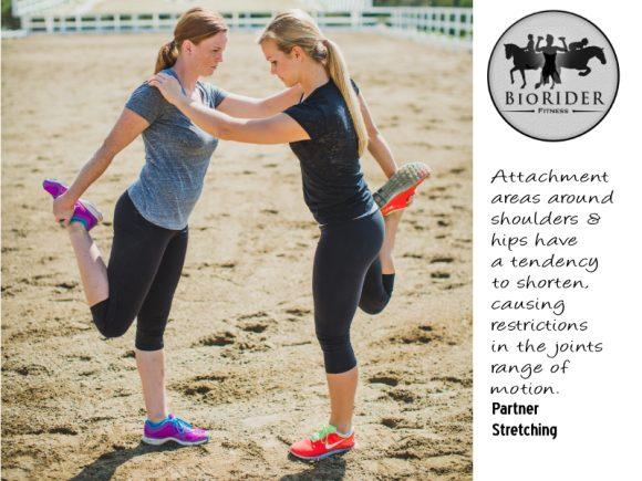 Partner-Stretching-banner